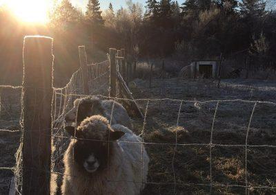 Wyndelin-Farm-010