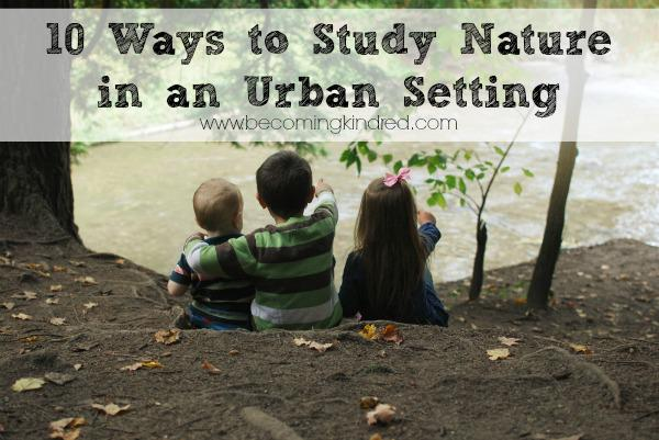 31 Days of Nature Walks: Nature in an Urban Setting (Guest Post)