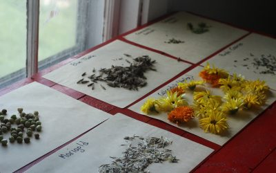 31 Days of Nature Walks-Seed Saving