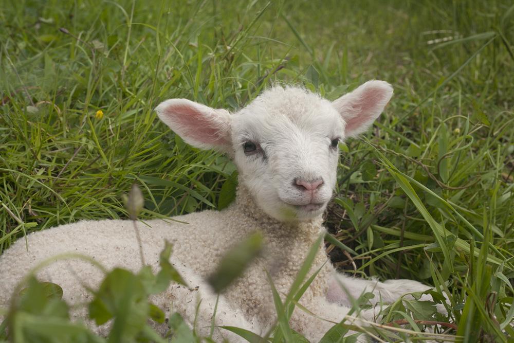 New Babies on the Farm